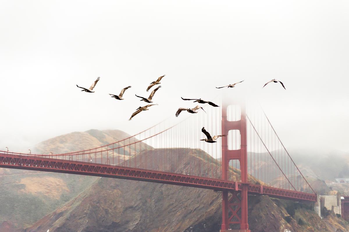 birds migrating san francisco