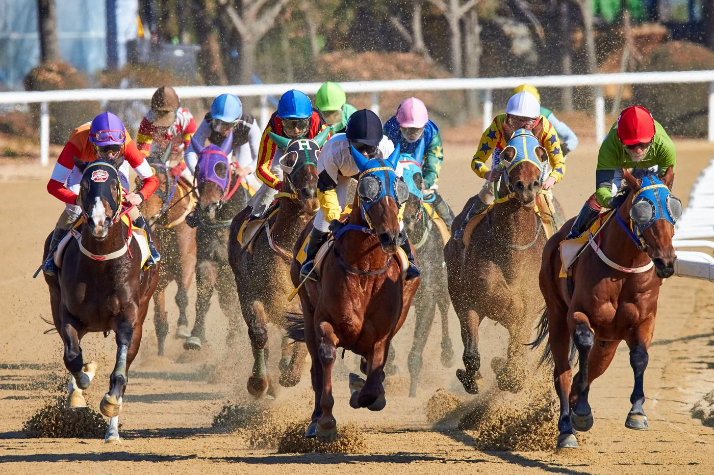 Horses racing on dirt